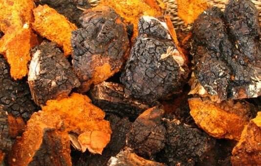 Organic Chaga Mushroom 20:1 Extract – 100g-1kg (Siberian Chaga)